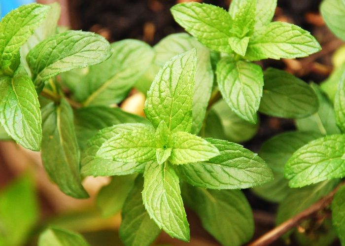 How To Use Mint Leaves For Acne - Face Masks