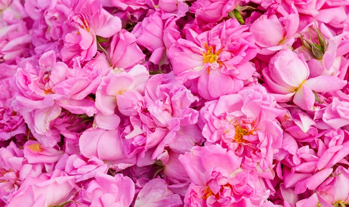 Bulgarian Damascena  Rose Petals