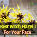 The Best Witch Hazel Toner For Face And Acne Reviews