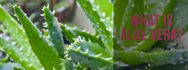 What Is Aloe
